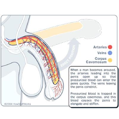 Thảo Dược Tăng Cường Sinh Lý Hàng Đầu Tại Mỹ Erect Zan (Sl15)